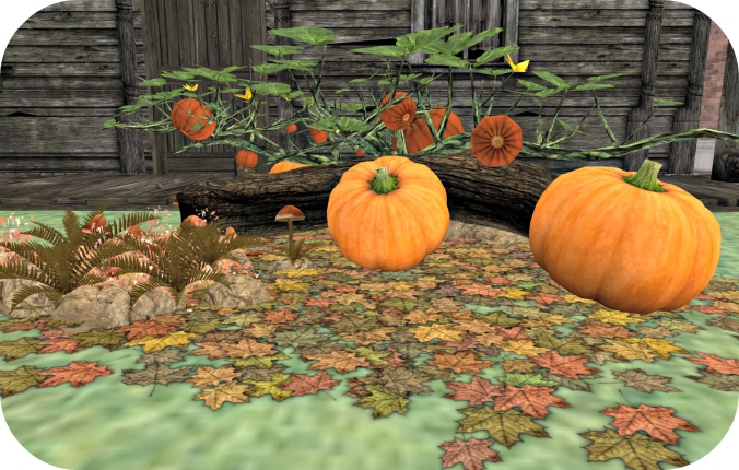 october-blog-post-photo-pumpkin-patch_cropped